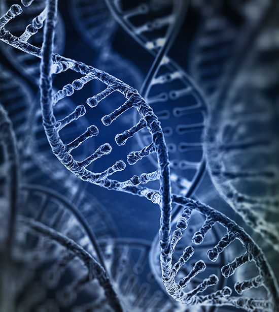 Unlocking the mystery of the ribosome a molecular key to genetic everyone has heard of dna but by itself dna is just an inert blueprint for life it is the ribosomean enormous molecular machine made up of a million malvernweather Choice Image